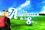 Les animaux de la 8 - Le cantal ou la passion animale